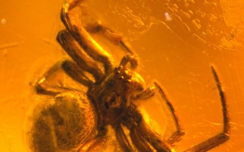 Рис. 29. Паук-бокоход, или паук-краб (Thomisidae)