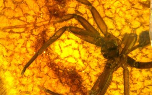 Рис. 55. Экзувии пауков