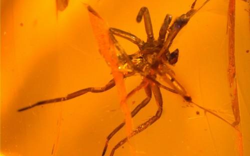 Рис. 52. Экзувии пауков