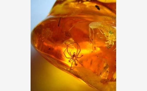 Рис. 56. Экзувии пауков