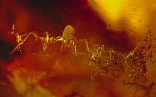 Рис. 45. Ловчая сеть паука с жертвами